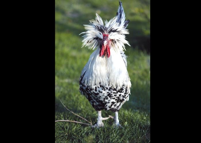 چسب پرنده مینا پرنده ای نرم خوار است دلیل این نامگذاری این است که مینا از غذاهای نرم تغدیه می کند.