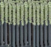 استفاده از جنگل مصنوعی برای تولید و ذخیره انرژی
