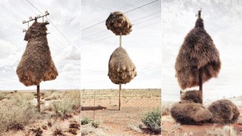 آشیانههای برقی پرندگان-آفریقا