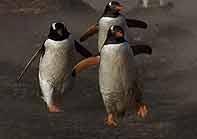 بازگشت پنگوئنها به خانه