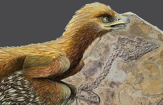 قدیمیترین پرنده جهان