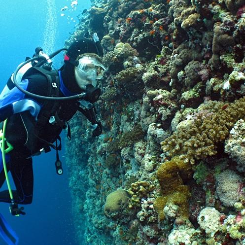 هشت درصد آبسنگهای مرجانی دنیا در خلیج فارس