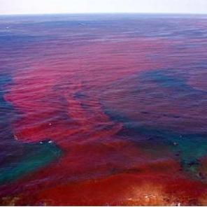 ریزگردها از بروز پدیده کشند قرمز در خلیج فارس جلوگیری میکنند