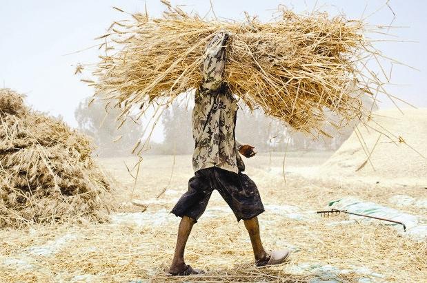 کشاورزی و دامداری در قم به صرفه نیست