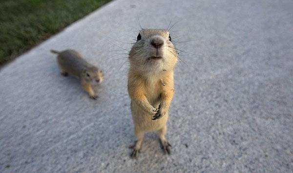عکسهای تلخ و شیرین از دنیای حیوانات