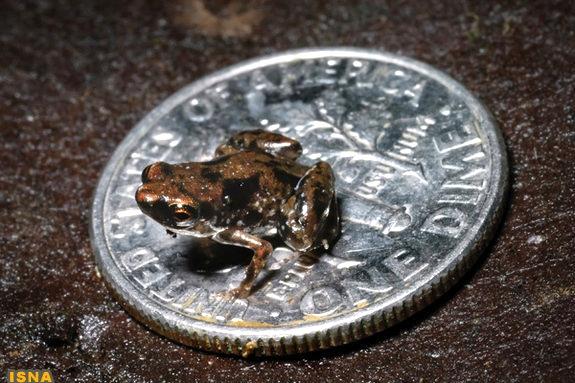 کوچکترین مهرهدار زنده جهان را بشناسید