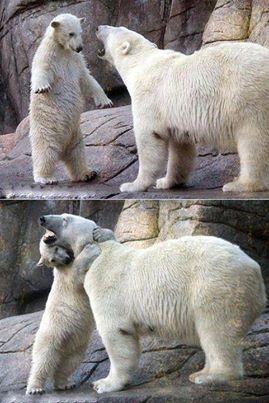 خرس کودک و خرس مادر