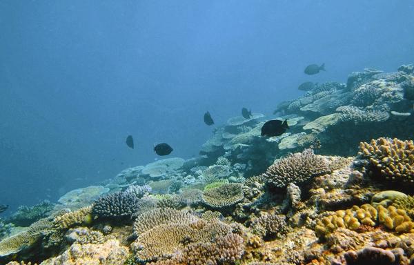 بهای سنگین اسیدیشدن اقیانوسها برای آبزیان