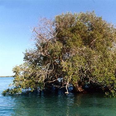 ارتقای سطح حفاظتی 16 منطقه ساحلی-دریایی