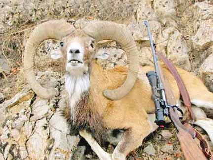۱۳۷ میلیون تومان جریمه برای شکارچی متخلف