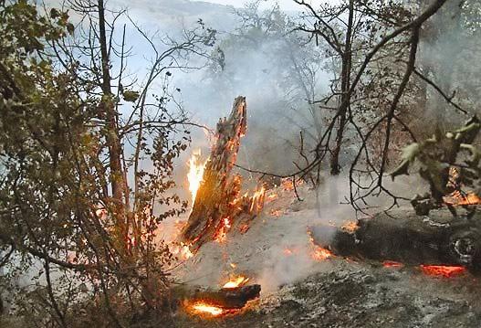 آتشسوزی 40هکتار از عرصههای ملی و جنگلهای بانه