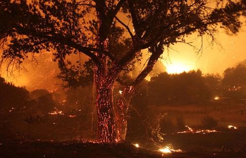 تصاویر آتش سوزی جنگلهای کالیفرنیا