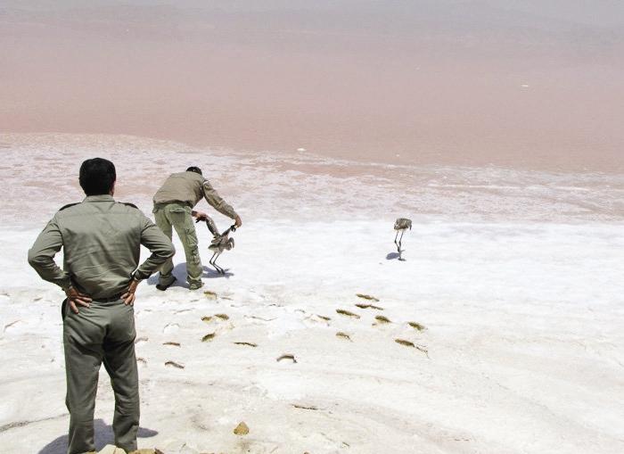 نجات 400 فلامینگو از میان نمکزارهای دریاچه خشک شده بختگان