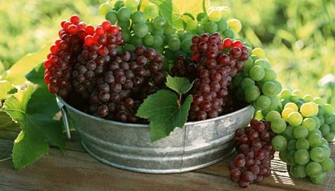 انگور سبز و قرمز