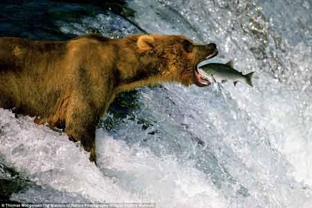 گزارش تصویری / آثار برترین عکاسان حیات وحش در یک کتاب