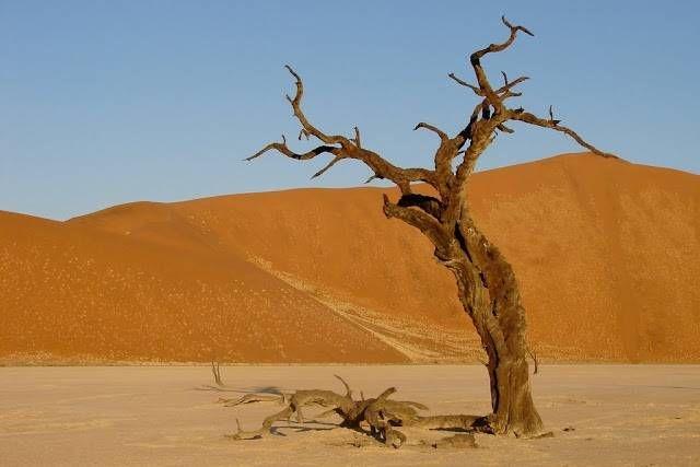 عکسهای گورستان شگفت انگیز  درختان