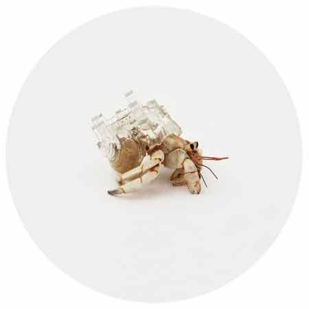 گزارش تصویری / خانههای مجلل برای خرچنگهای جهان