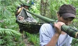ویتنامی در جنگل