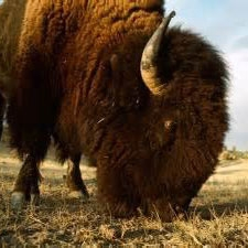 انقراض حیوانات عظیمالجثه، عامل کاهش مواد مغذی خاک