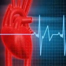 تپش قلب موش با سلولهای انسانی