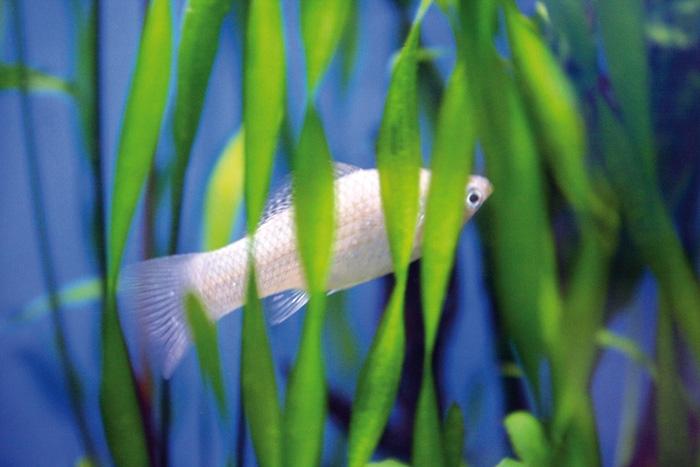 ماهیها هم استرس میگیرند