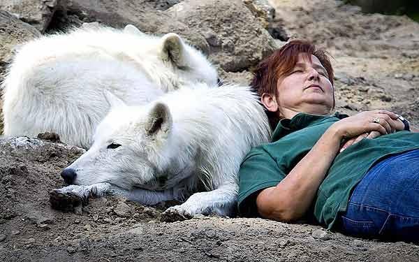 گرگ قطبی