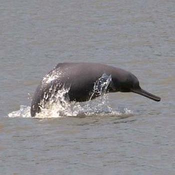دلفینهای نابینا هم حرکات مربی خود را تقلید میکنند
