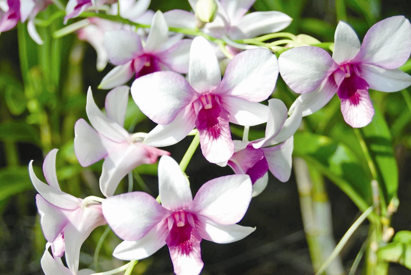 افزایش ۲۰درصدی تجارت گل و گیاه در دوبی