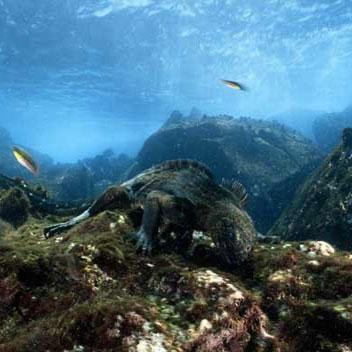 بزرگترین آتشفشان جهان زیر آبهای اقیانوس آرام