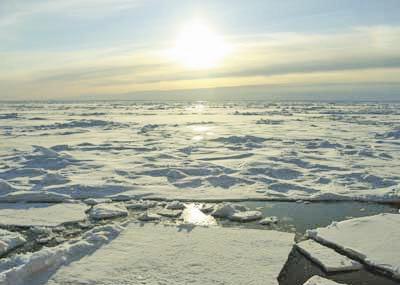 مهاجرت آفتهای کشاورزی به سوی قطبها