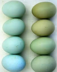 حل معمای تخممرغهای آبی