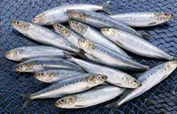 چگونه از غذاهای دریایی نگهداری کنیم؟