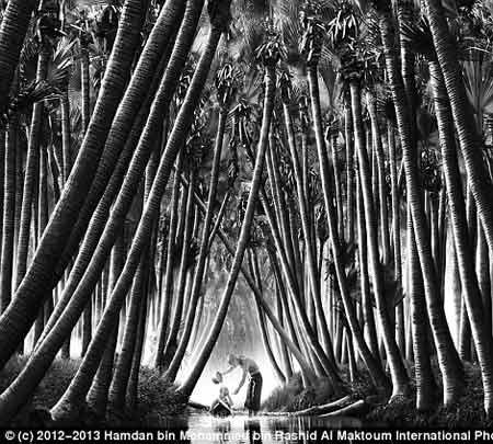 برگزیدههای نهایی بزرگترین رقابت عکاسی جهان