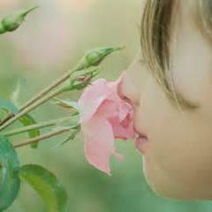 انسان ۱۰ نوع بو را حس میکند