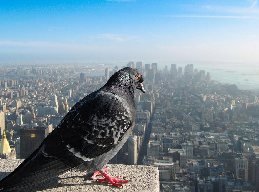 دنیا از نگاه پرندگان