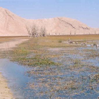 تالابهای آذربایجان غربی در دام جلبکها و خزهها