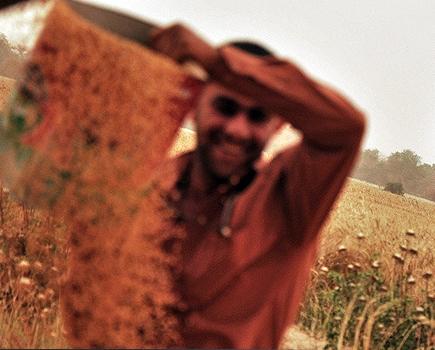 تایید تولید ۷ میلیون تنی گندم و رد آمارهای دولت گذشته