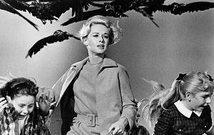 نمایی از فیلم پرندگان محصول ۱۹۶۳