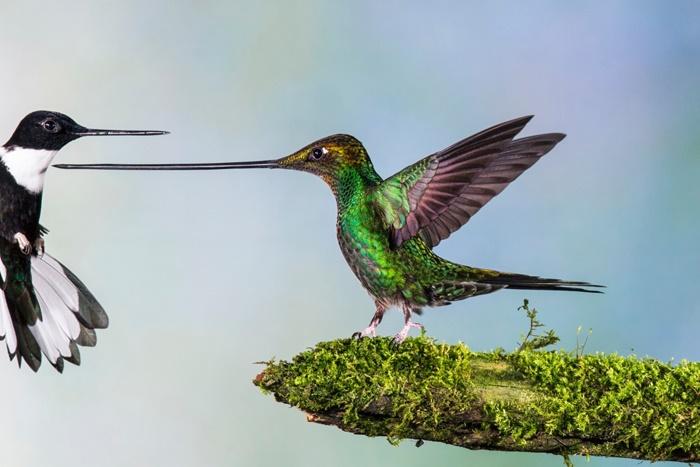 عکاس حیاتوحش سال انتخاب شد / تصاویر دیدنی برترین عکسهای حیات وحش