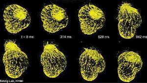 فیلمبرداری سهبعدی از سلولها