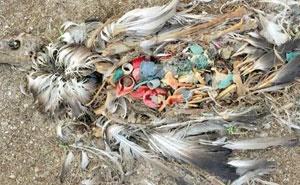 مستندی برای تنفر از پلاستیک