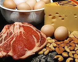 دریافت پروتئین باید در طول روز باشد