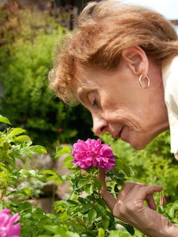 بوی مرگ میآید؛ یافتههای تازه درباره حس بویایی