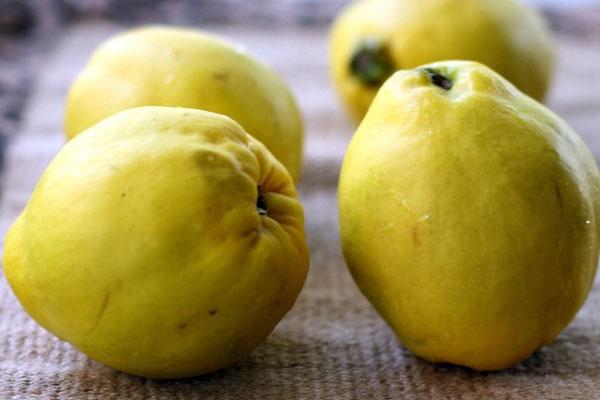 میوه، دانه و برگهای به را دریابید