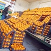 واردات میوه همچنان ممنوع است