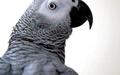 بازگشت طوطی پس از ۴ سال
