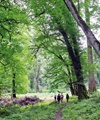 کمبود اعتبار مانع بزرگ توسعه جنگلهای ساحلی
