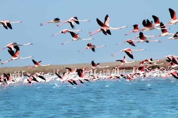 تالاب - پرندگان