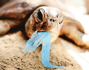 ۲۶۹هزار تن پلاستیک در اقیانوسها