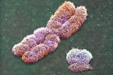 مردان سیگاری کروموزوم Y خود را از دست میدهند